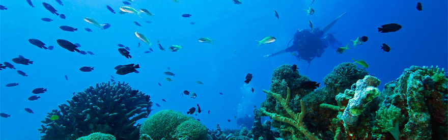 diving_mini_banner