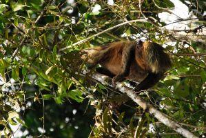 sloth,-o-peresoso
